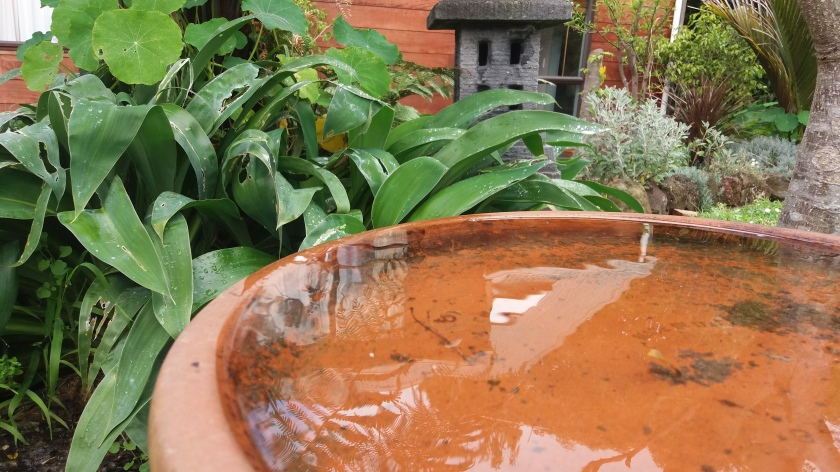 Water feature in your healing garden