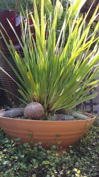 Healing garden pots