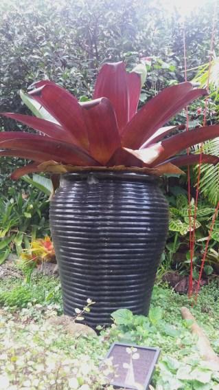 Pots in your healing garden